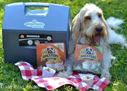 Dogsters Blogger Outreach